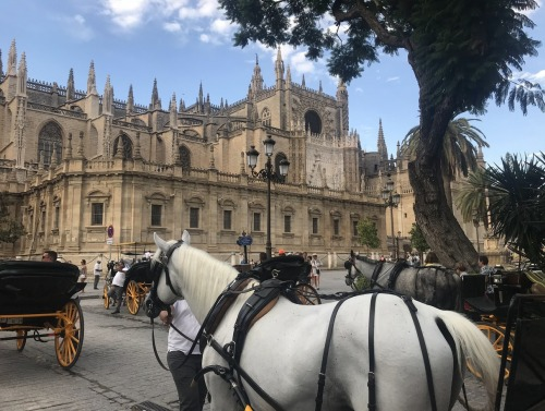 Image of architecture in Seville with horse-drawn carriages in foreground.