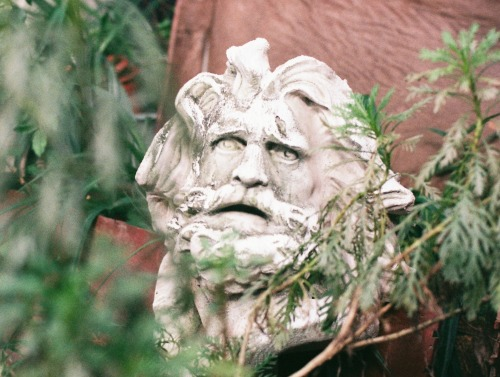 Image of statue head in plant