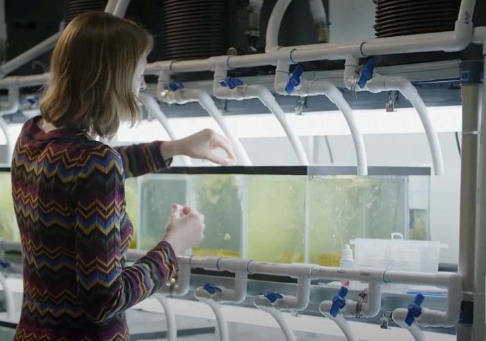 Person working with aquarium tanks in lab